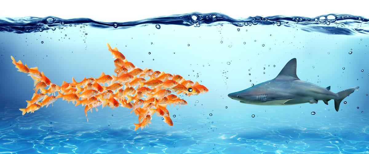 Teamwork fish